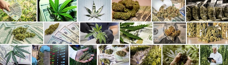Cannabis Shares to invest in